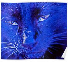Blue boy Poster