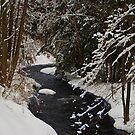 Still Winter? by barkeypf