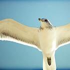 Sea bird by Virag Anna Margittai