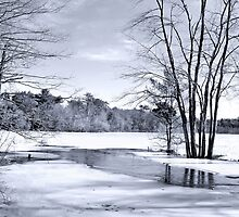 Pond in Black and white by john forrant