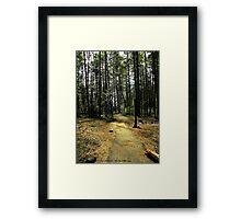 Kootenai Falls Trail Framed Print