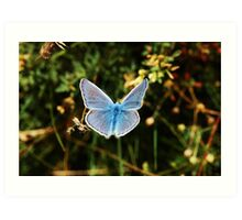 Common Blue - Male/ Dos Puntos/Polyommatus icarus/ Art Print
