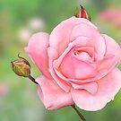 Rose by Lifeware