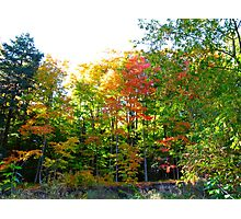 A landscape of leaves rejoicing Photographic Print