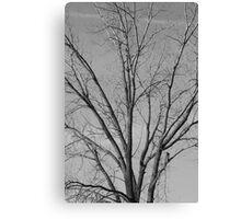 Wisconsin Tree Canvas Print