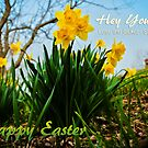 Dissed by Daffodils Easter Card by Jeanne Sheridan
