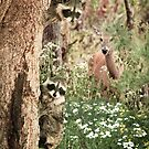 """Peek At Nature"" by John Hartung"