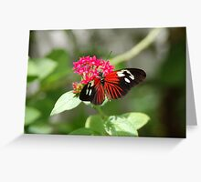 Butterfly 1 Greeting Card