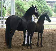 Friesian Mare & Filly by louisegreen