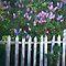 New Challenge - Backyard Fences