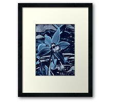 Orchid Collection - 5  Framed Print