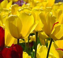 Yellow Sunlit Tulips Garden Spring art Baslee Troutman by BasleeArtPrints