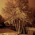 March 21st snow at 3am by loralea