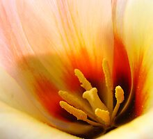 Tulip Flower macro Peach Orange Flowers art Baslee Troutman by BasleeArtPrints