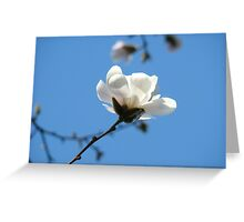 Blue Sky Floral art White Magnolia Flowering Tree Spring Baslee Greeting Card