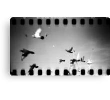pigeons, phnom penh, cambodia Canvas Print