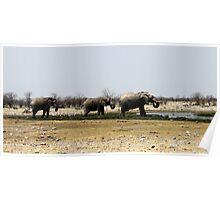 Etosha Elephants Poster