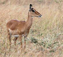 Deer in the headlights!  by qiutianran