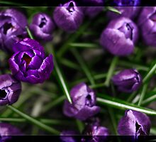 Living Purple by The Jonathan Sloat
