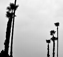 Palm Tree Standoff by kyleO