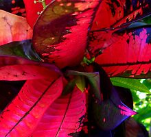Gorgeous Pink & Blue Leaves by Angela Gannicott