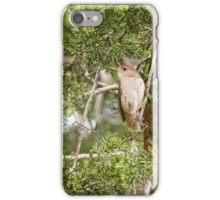 House wren sitting in cedar trees iPhone Case/Skin
