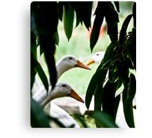 What Dat?? Canvas Print