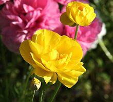 Happy Spring! by Nira Dabush
