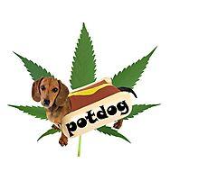 Potdog Photographic Print
