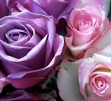 Purple & Pink by rualexa