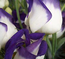 Purple & White by rualexa