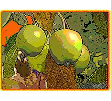 MeleCotogne(Quinces) Photographic Print