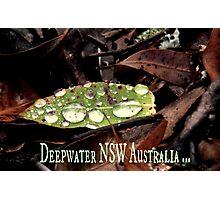 Deepwater NSW Australia Photographic Print