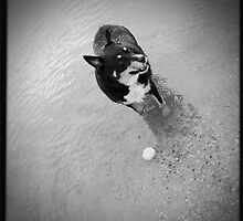 Fetch the ball by LJ_©BlaKbird Photography