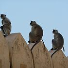 3 Monkeys by bm220