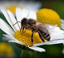 Bumble Bee by Hazel Dean