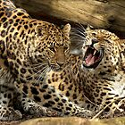 Get Off My Patch! by Mark Hughes