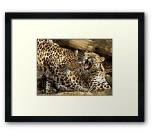 Get Off My Patch! Framed Print