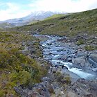Wandering Alpine Stream – Tongariro National Park  by Henry Inglis
