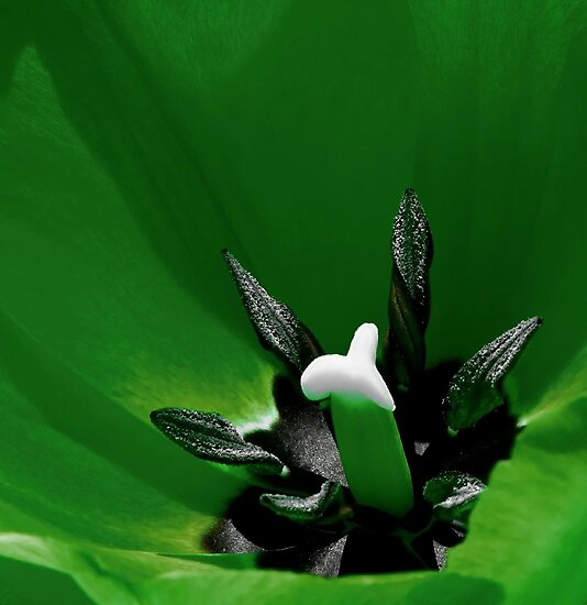 *Green Tulip Macro* by DeeZ (D L Honeycutt)