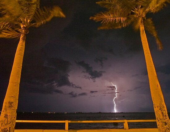 Palm tree lightning by Larry  Grayam