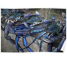 Crab Catch Poster