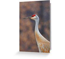 Sandhill Crane Portrait Greeting Card