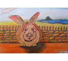 331 - LINDISFARNE BUNNY - DAVE EDWARDS - COLOURED PENCILS - 2011 Photographic Print