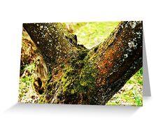 Mossy Tree Greeting Card