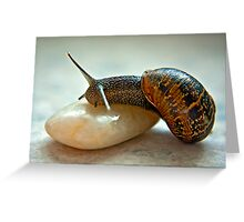 Garden Snail Greeting Card