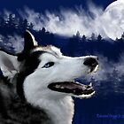 Blue Eyed Alaskan Husky by Edmond  Hogge