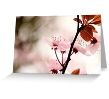 Blossom Pink Greeting Card