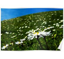 Field Full Of Daisies Poster