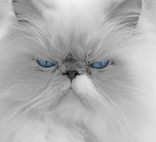 Blue Eyes by Laura Retyi